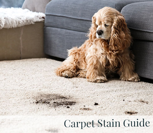Carpet Stain Guide